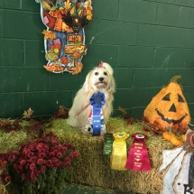 Obedience Rally Trial OCT 2016 Isabella's CD 14